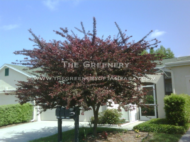 the greenery nursery and garden center, Natural flower