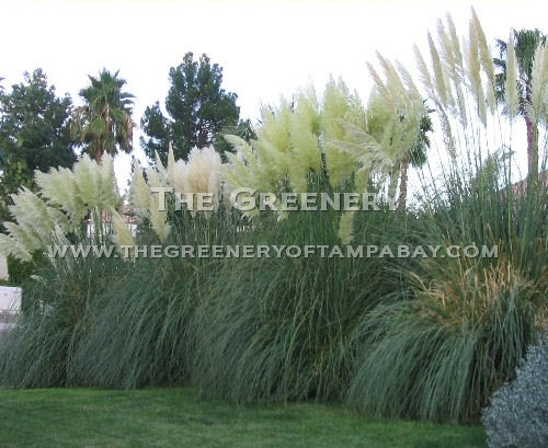 Landscaping Ideas Using Grasses : The greenery nursery and garden center